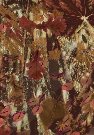 Anne tilby Oscar Wilde: leaves backdrop