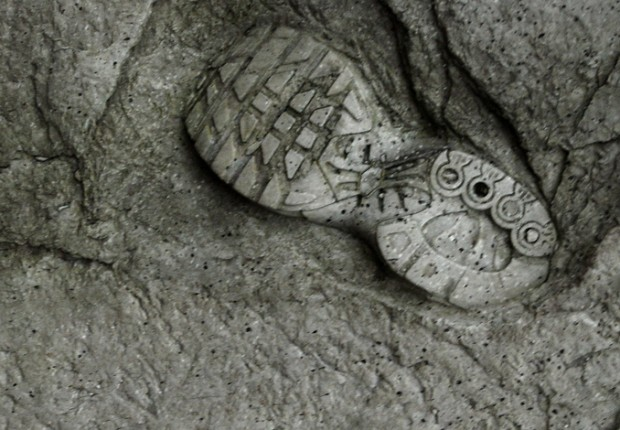 Anne tilby plinth fossil detail