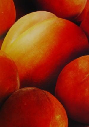 tilby twincheeks peach